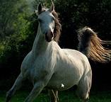 Спасаем лошадь из лабиринта